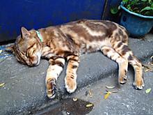 Cat_golden0831