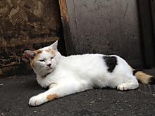 Cat_golden2